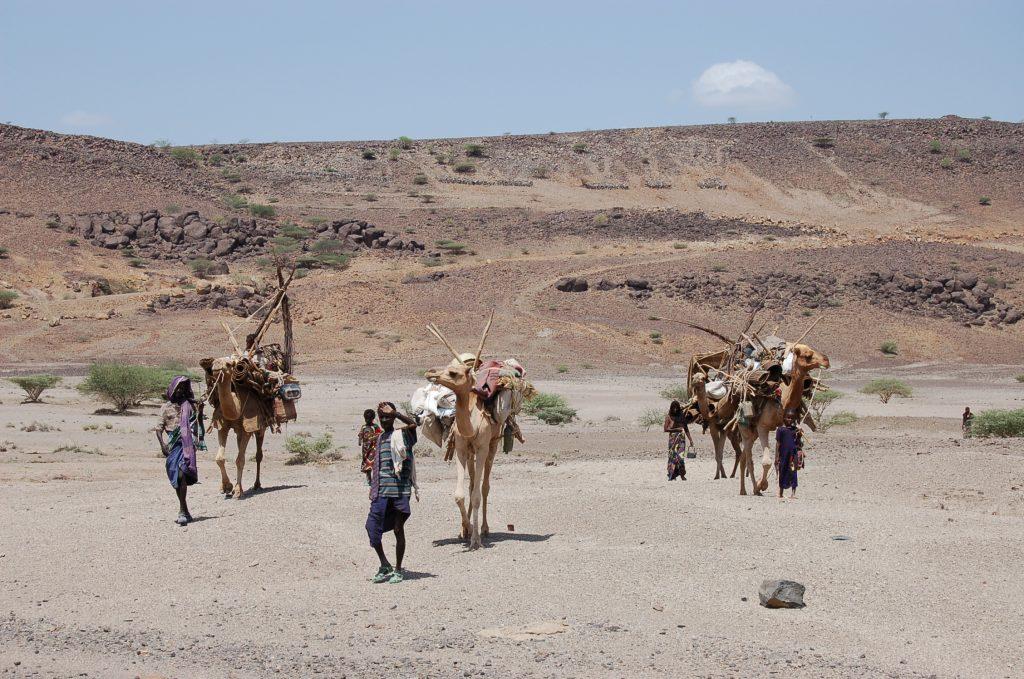 Afar Nomaden auf der Suche nach Wasser, Nahrung, Futter
